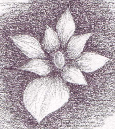 flower_a_12052006-510