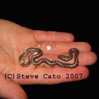 stevecato_snakes-889b-793